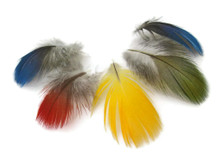 10 pieces - Mix Parrot Macaw body plumage feathers