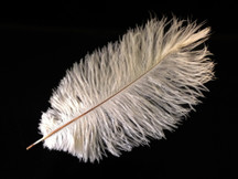 "10 Pieces - 14-17"" OFF WHITE Ostrich Drab Body Feathers"