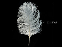 10 Pieces - White Ostrich Tail Centerpiece Costume Feathers