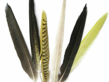 4 Pieces - Yellow And Black Cockatiel Tail Feathers