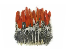 5 Pieces - SHORT NATURAL Orange Tips Lady Amherst Pheasant Feather