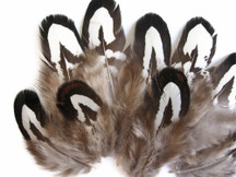 10 Pieces - Tiny Black And White Reeves Venery Pheasant Plumage Feathers