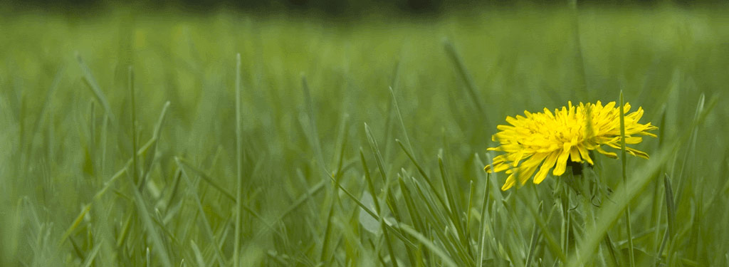 slider-lawnweed.fw-.png