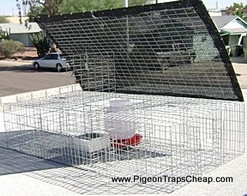 Large Pigeon Trap - Humane