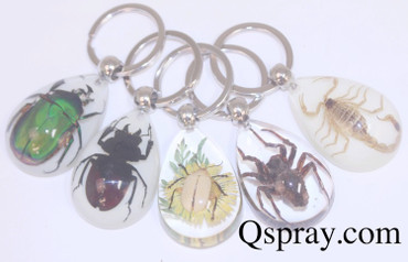 Insect Key Rings - Quantity 5
