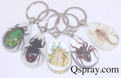 Cool Insect Key Rings