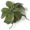 """9"""" Succulent Stem with Roots Natural Touch"""