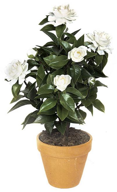 19 Inch Gardenia Bush - White