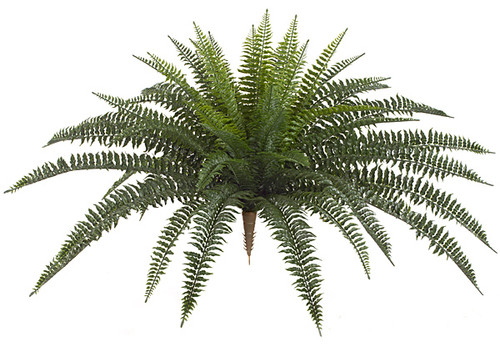 30 Inch Outdoor Boston Fern