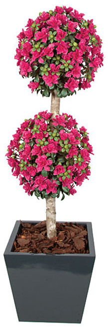 5 Foot Polyblend Azalea Double Ball Topiary