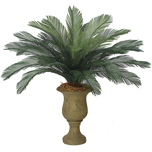 44 Inch Cycas Palm, 24 Fronds