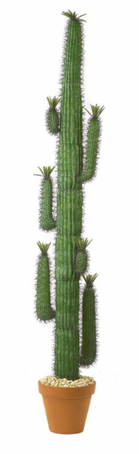 8 Foot Saguaro Cactus
