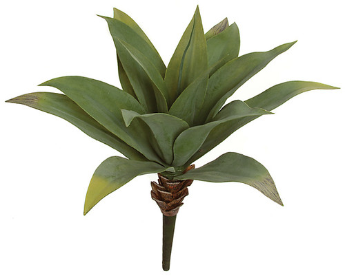 22 Inch Agave Plant