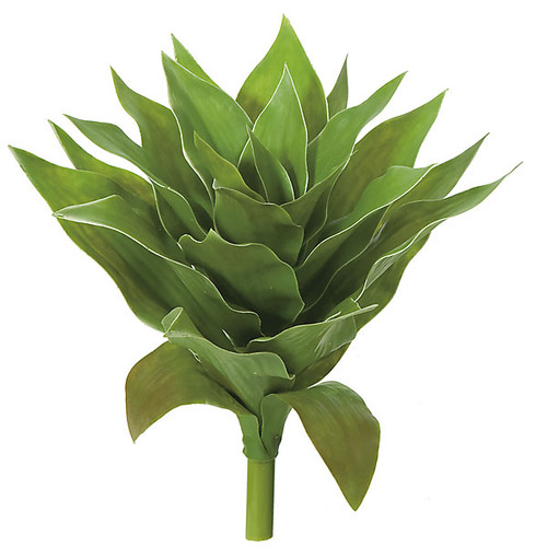13 Inch Agave Plant