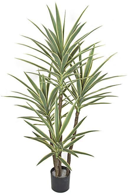 60 Inch UV Rated Yucca Plant