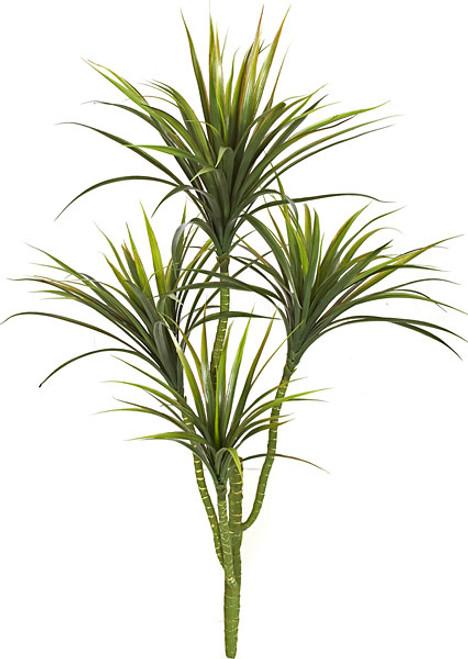 42 Inch Yucca Plant x 4