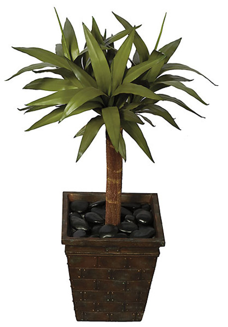 34 Inch Yucca Plant