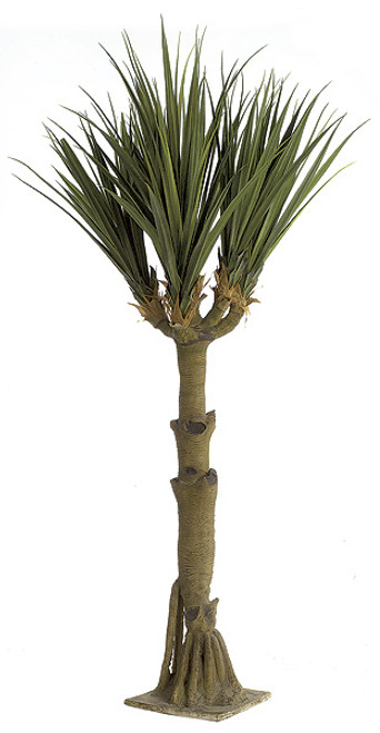 11 Foot Yucca Tree