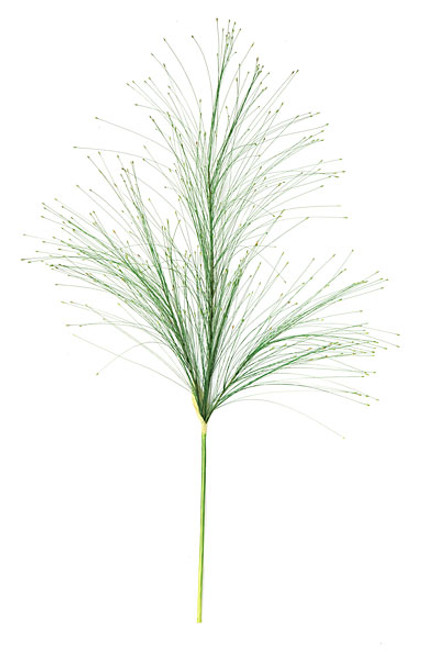 36 Inch Plastic Seed Grass
