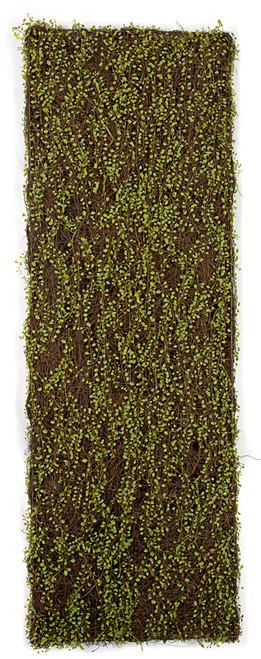72 x 24 Inch Mohlenbechia Screen