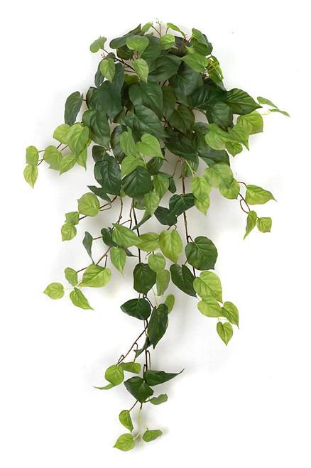 "P-12090548"" Philodendron Bush"