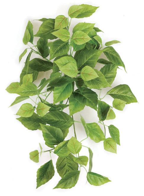 """P-14028026"""" Cissus BushLight Green"""