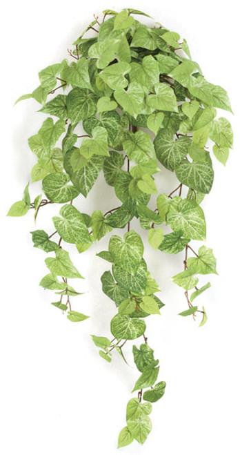 "P-14131042"" Hanging Potato Leaf Bush"