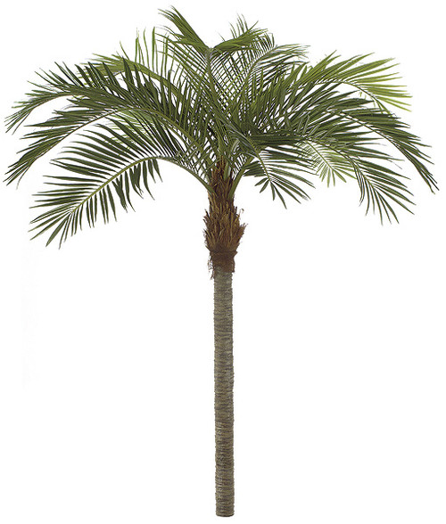 11 Foot Coconut Palm Tree with Metal Plate