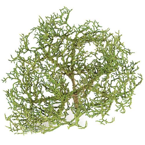 """13"""" Tea Tree Stump"""