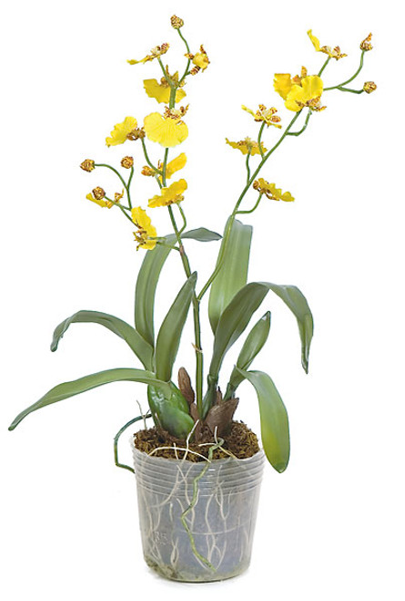 "16"" Potted Dancing Orchid"
