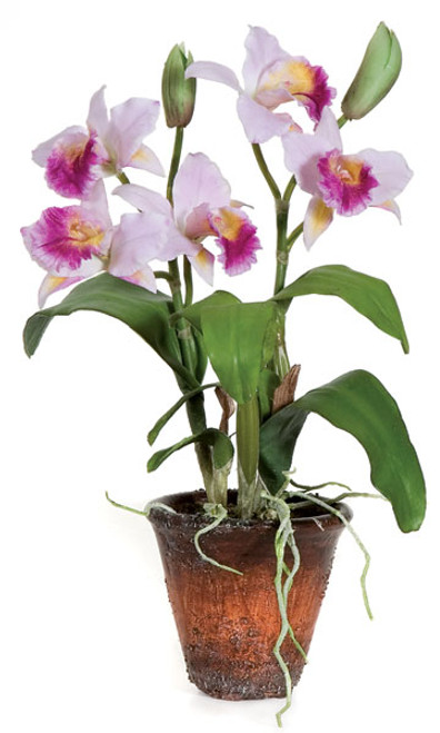 15 Inch Potted Dendrobium Plant