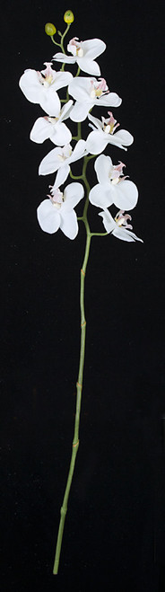 31 Inch Phalaenopsis Orchid - White