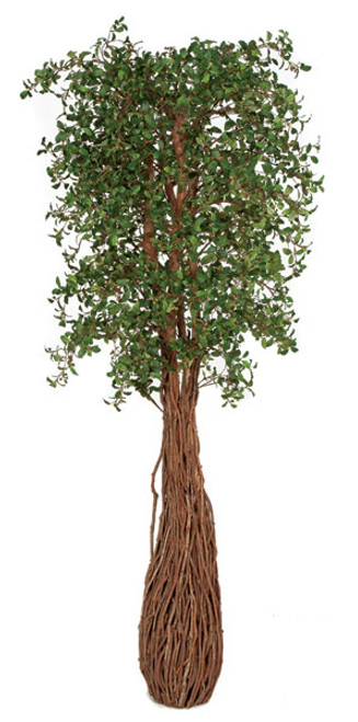 7  Foot Live Oak Tree with Exotic Wood Trunk