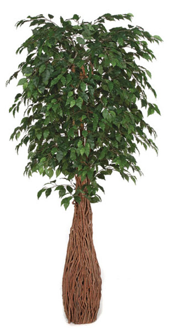 7  Foot Ficus Tree with Exotic Wood Trunk