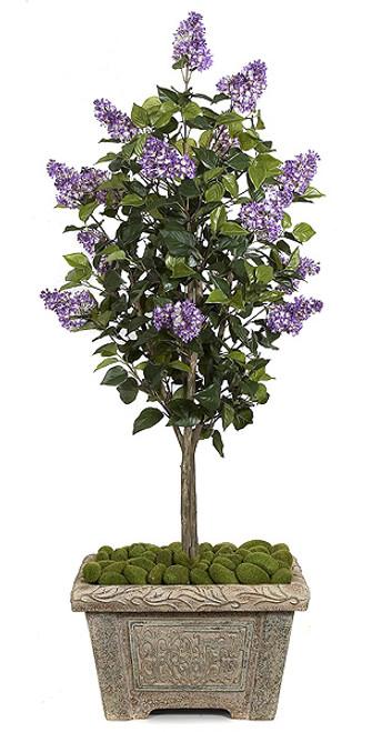 5 Foot Lilac Tree - Purple