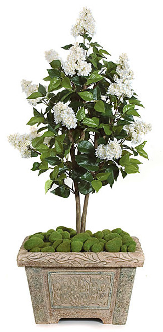 4 Foot Lilac Tree - Cream/White