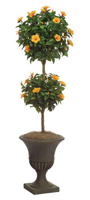 6 Foot Hibiscus Double Ball Topiary