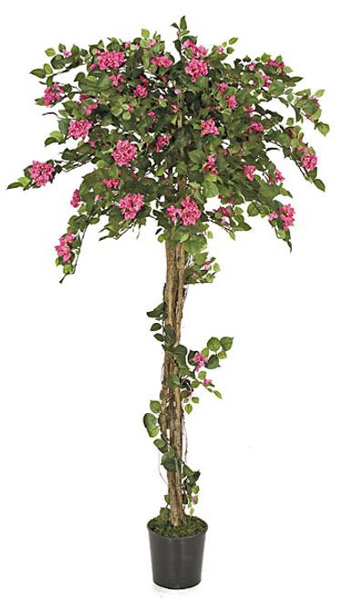 6 Foot Bougainvillea Topiary - Beauty