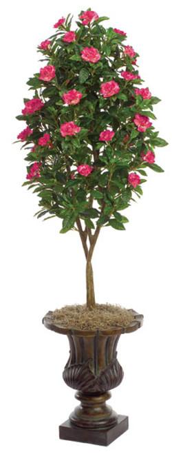 4.5 Foot Gardenia Topiary - Beauty