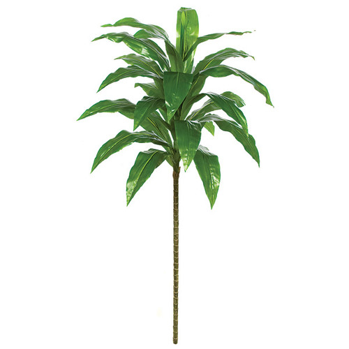 60 Inch Soft Touch Dracaena Plant