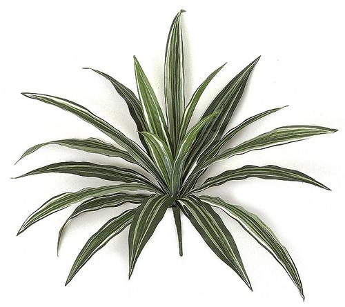 "PR-491116"" Dracaena PlantFire Retardant"