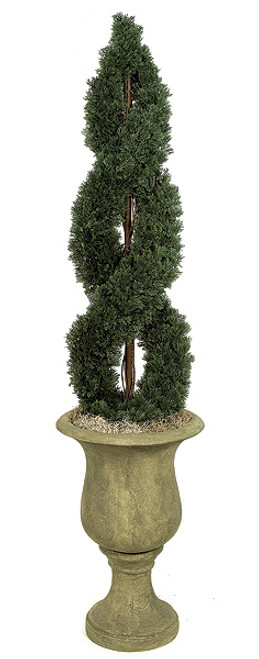 4 and 6 Foot - Double Spiral Cypress Topiaries