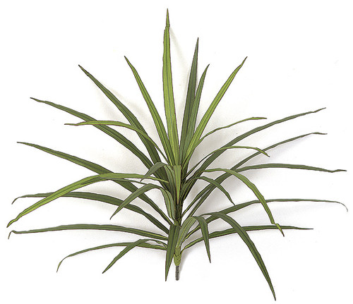 "P-501118"" Dracaena Plant"
