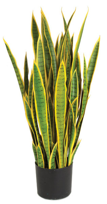 39 Inch Sansevieria Plant - Green/Yellow