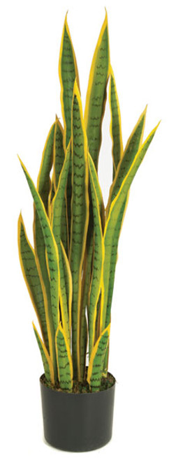 40 Inch Sansevieria Plant - Green/Yellow