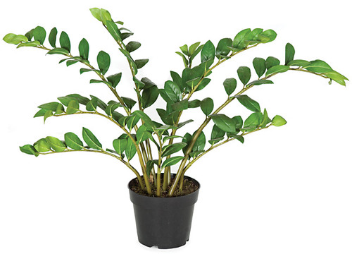 22 Inch Natural Touch Zamia Plant