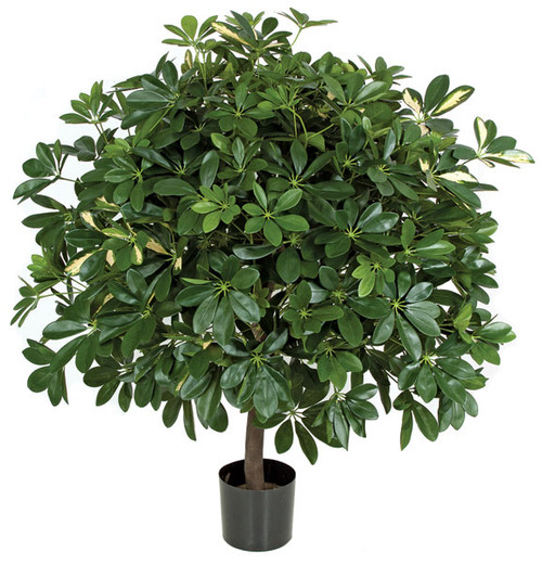 43 Inch IFR Schefflera Ball Tree