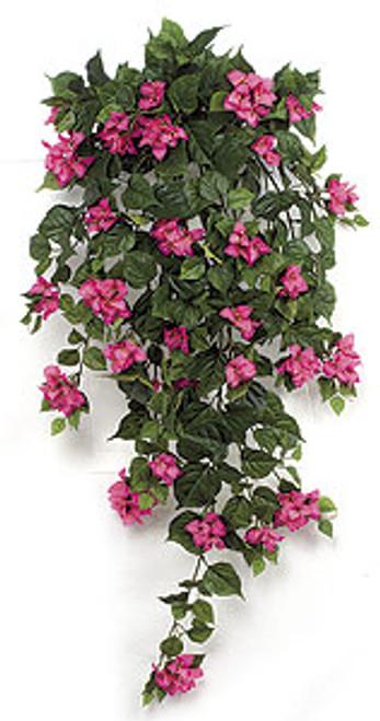 P-1831 - Beauty Bougainvillea Bush