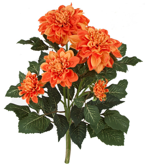 22 Inch IFR Dahlia Bush - Yellow, Orange, Beauty