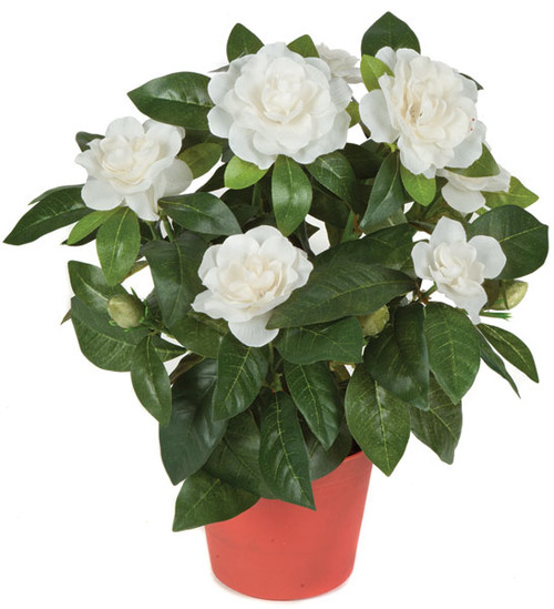 16 Inch Potted Gardenia Plant